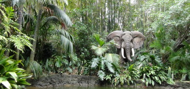 The week Jungle Cruise re-opened...and it was awesome