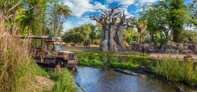 WDW-The week we went to the Animal Kingdom for the first time 10/15/16